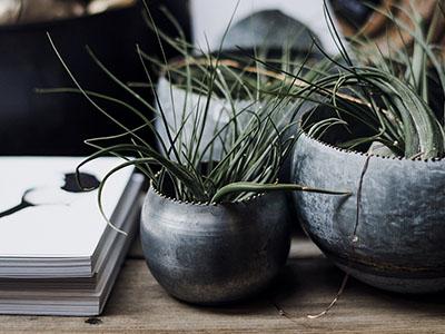 pme : plantes dans pots sur bureau